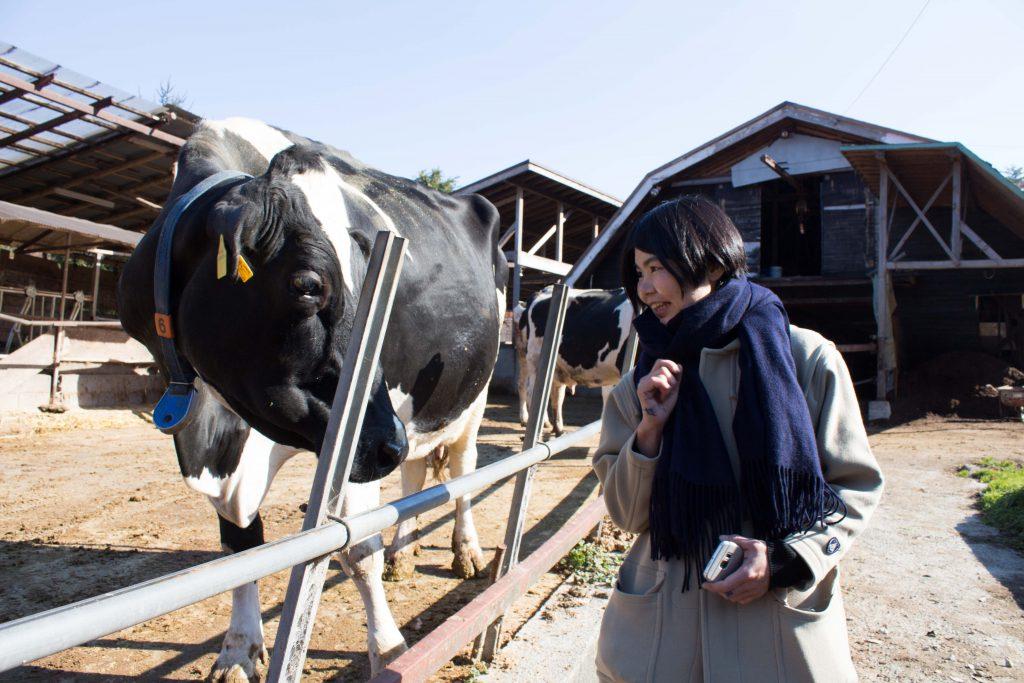 牛にちかづくマユちゃん